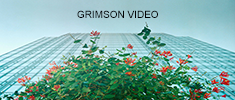 Grimson Video - video motion & still images
